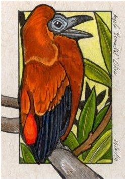 140114-capuchinbird
