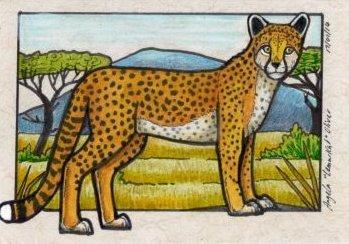 170114-cheetah