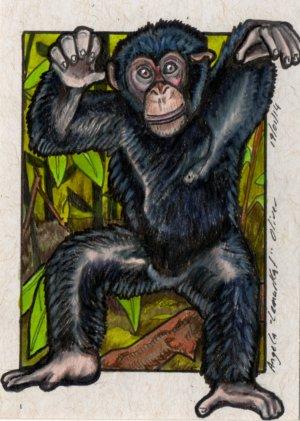 190114-chimp