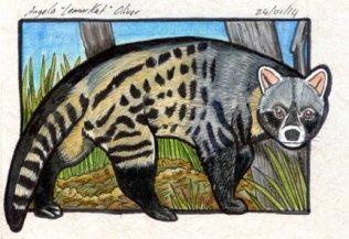 240114-civet