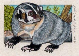 241113-badger
