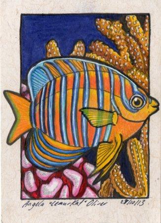 281013-angelfishoceanic