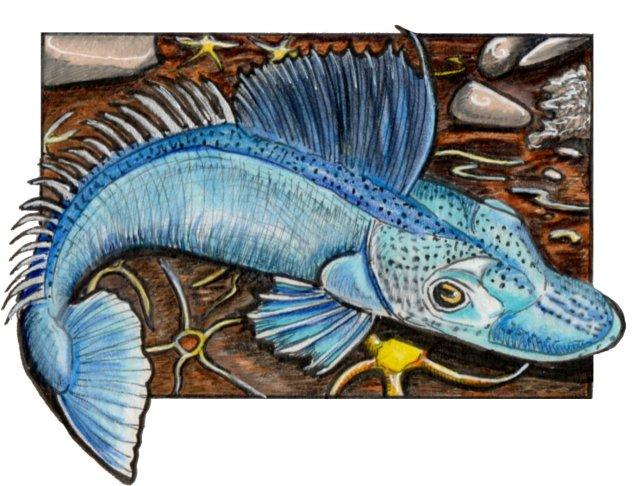 icefish
