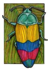 jewelbeetle