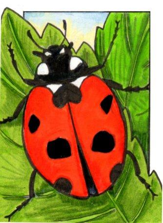 ladybird2