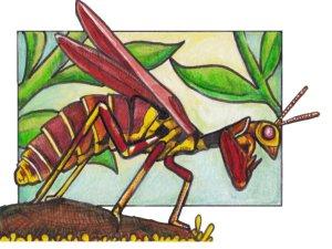 mantisfly
