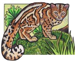 marbledcat