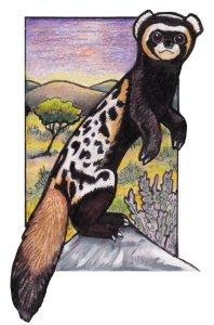 marbledpolecat