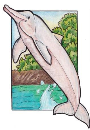 pinkriverdolphin