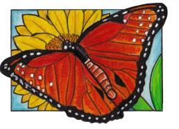 queenbutterfly