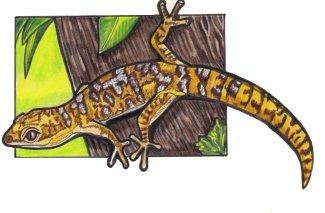 velvetgecko