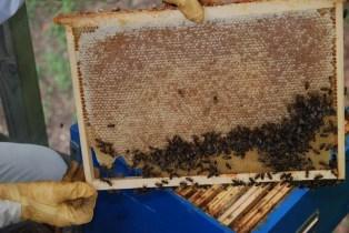 Cadre miel - Rucher des Trésoms Annecy
