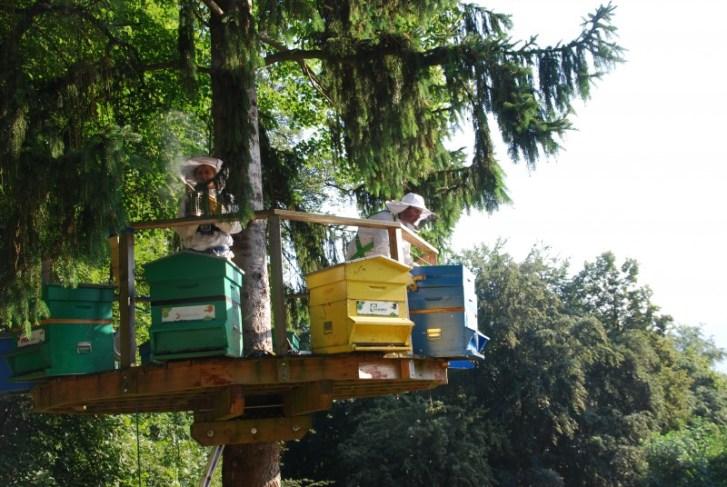 Récolte miel 2016 - Rucher des Trésoms Annecy