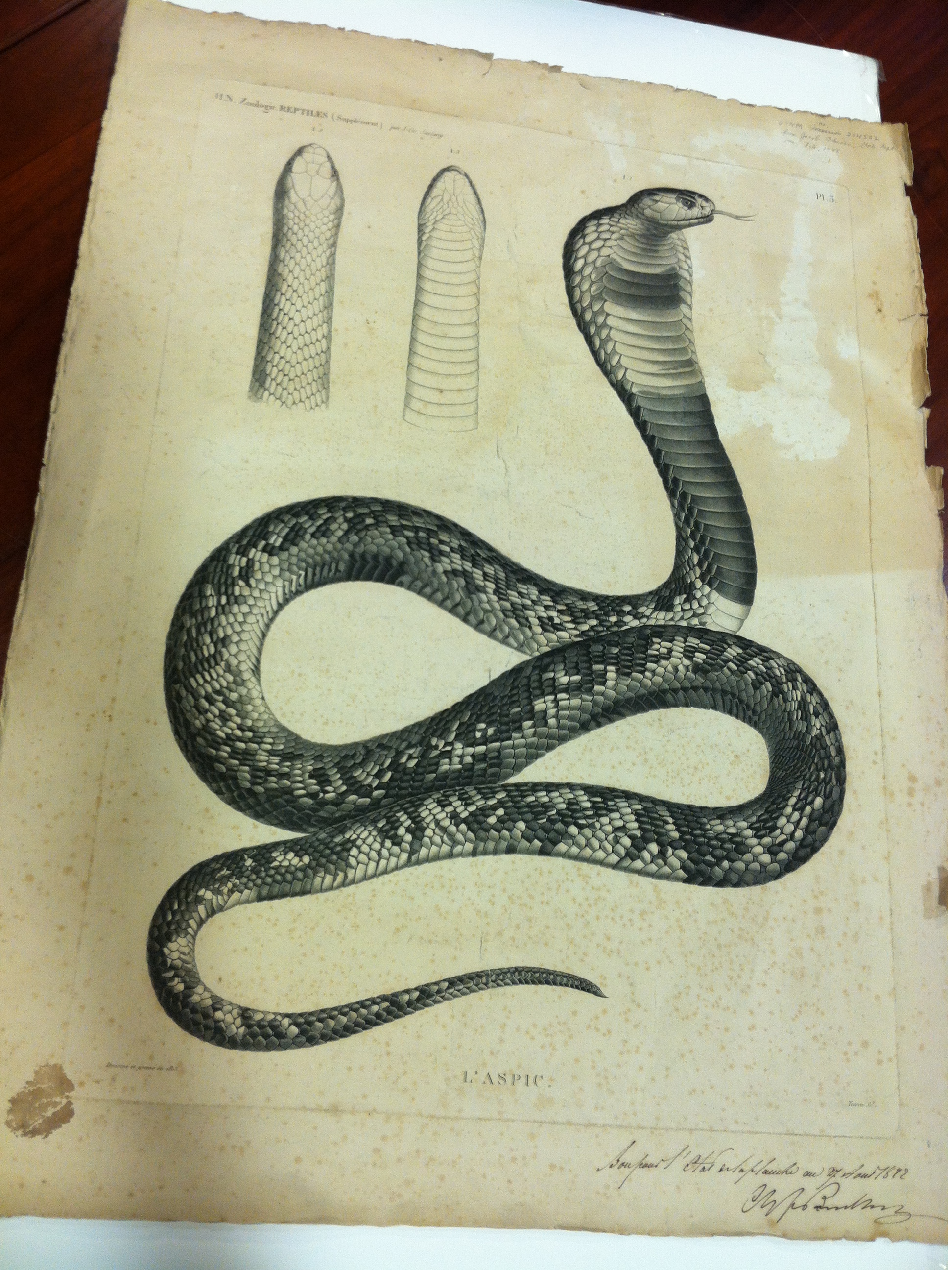 A Snake in the Library or the Mysterious Whereabouts of the Villa Warden a Former United