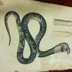 French Living Rooms Images Room Interior Design Photo Gallery India A Snake In The Library, Or, Mysterious Whereabouts Of ...