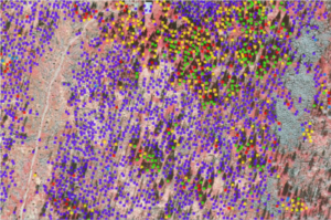 Image of 3D mapping of tree species and dead trees