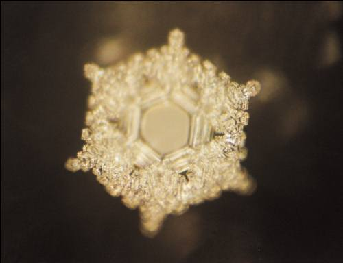 Dr. Emoto - Love and Gratitude