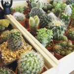 Tips For Growing Succulents Indoors Lincoln Property Company