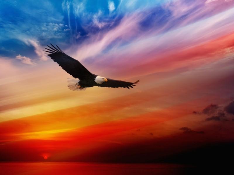 Image result for eagles soaring