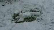 """""""Snow Minion"""" by Han"""