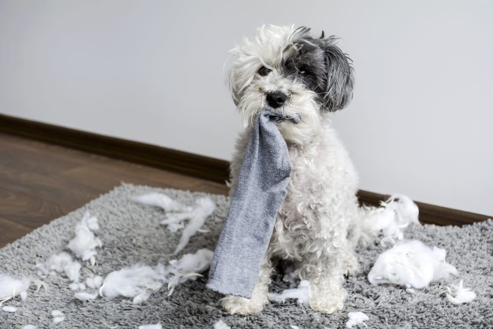 cachorro-para-apartamento-cachorro-bagunceiro-loft