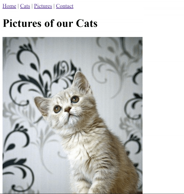 A screenshot of our Vue cat website featuring an image of a cat.