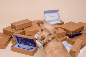 Dog Sitting in Front of Cardboard Boxes
