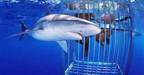 squali bianchi sudafrica