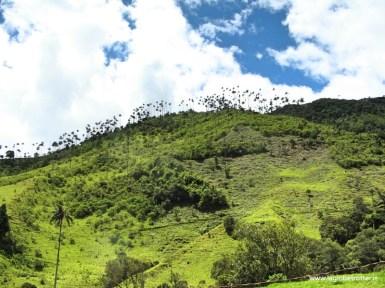 cocora visitare colombia