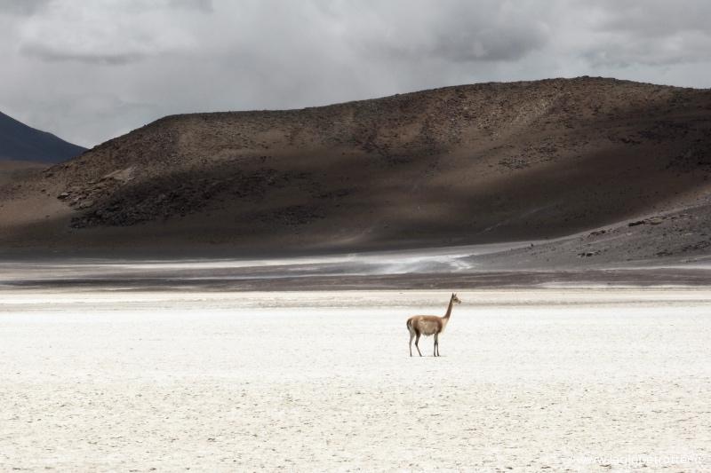 Deserto Bolivia - Cile