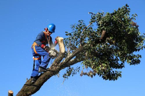 27.05.2019 Poda de árvores e limpeza