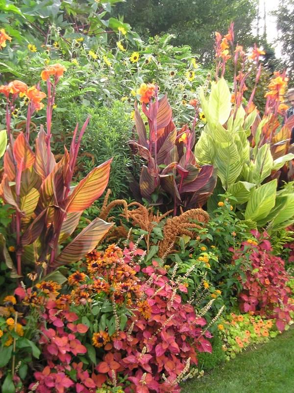 wow plants summer garden
