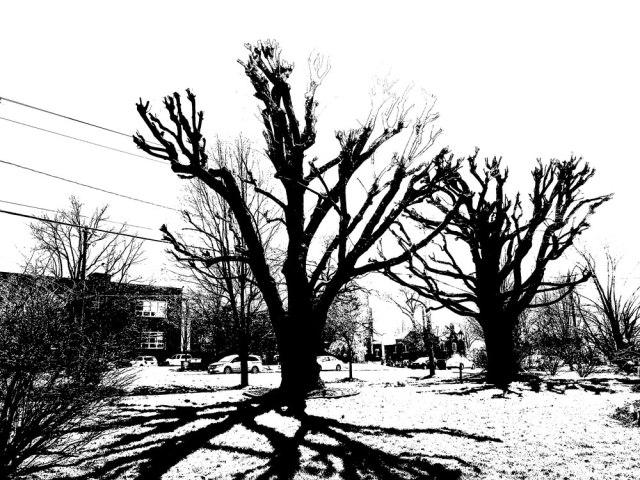 trees_IMG_4646