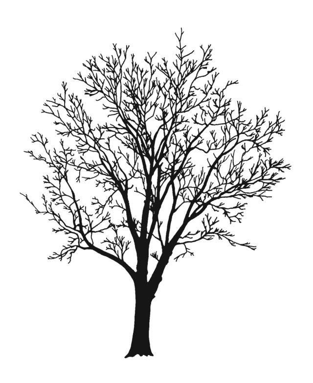 black-walnut1