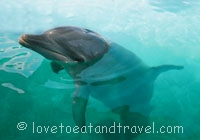 Dolphins - Swimming with the Dolphins at Blue Lagoon Island, Bahamas