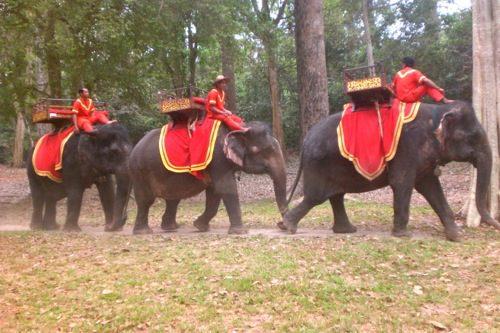 Elephants in Angkor, Cambodia - © B. Miller