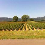Silver Oak Cellars vineyard in Napa Valley - © LoveToEatAndTravel.com