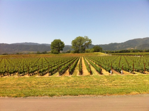 Silver Oak Cellars vineyard in Napa Valley - © LoveToEatAndTravel.com