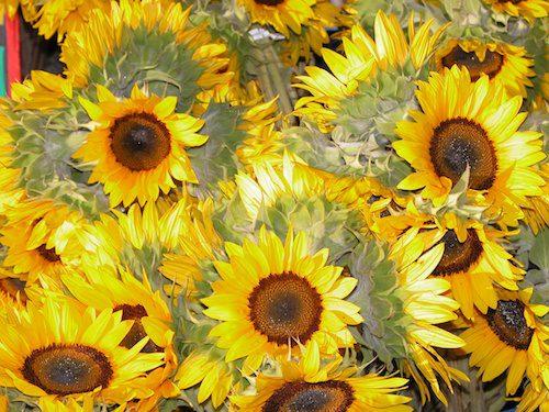 Sunflowers © LoveToEatAndTravel.com