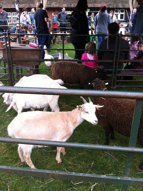 Farm animals at Ruislip Duck Pond Market – © LoveToEatAndTravel.com