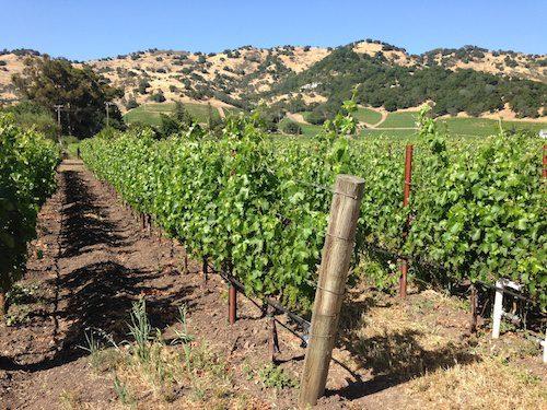 Napa Valley vineyard, Napa Valley Wine Country, CA – © LoveToEatAndTravel.com