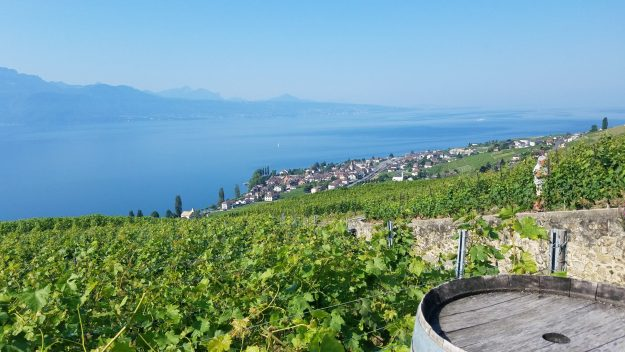 Lavaux tending the vineyards with Lake Geneva and the Alps in the background - Credit: Deborah Grossman