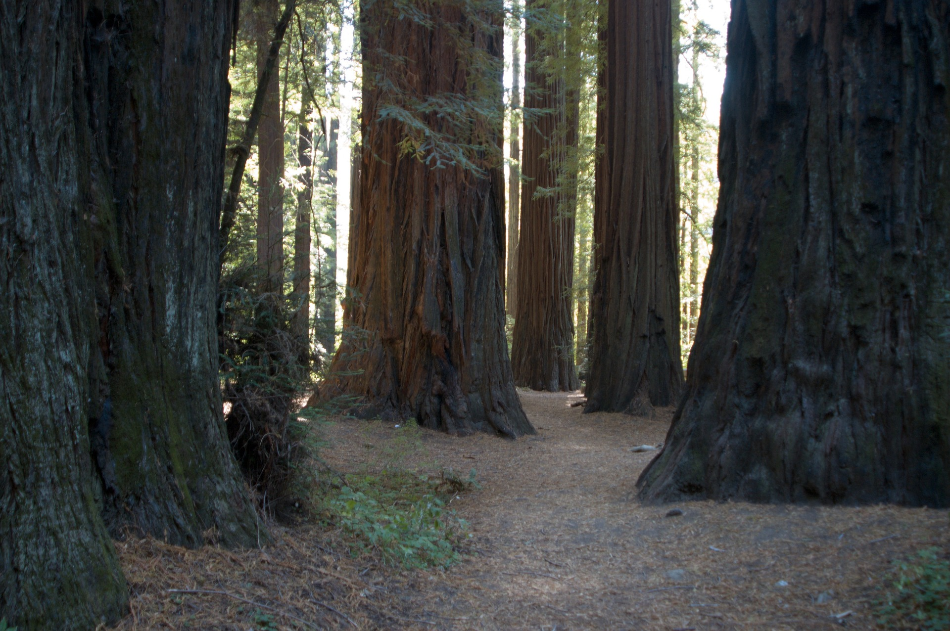 Muir Woods, Marin County, California