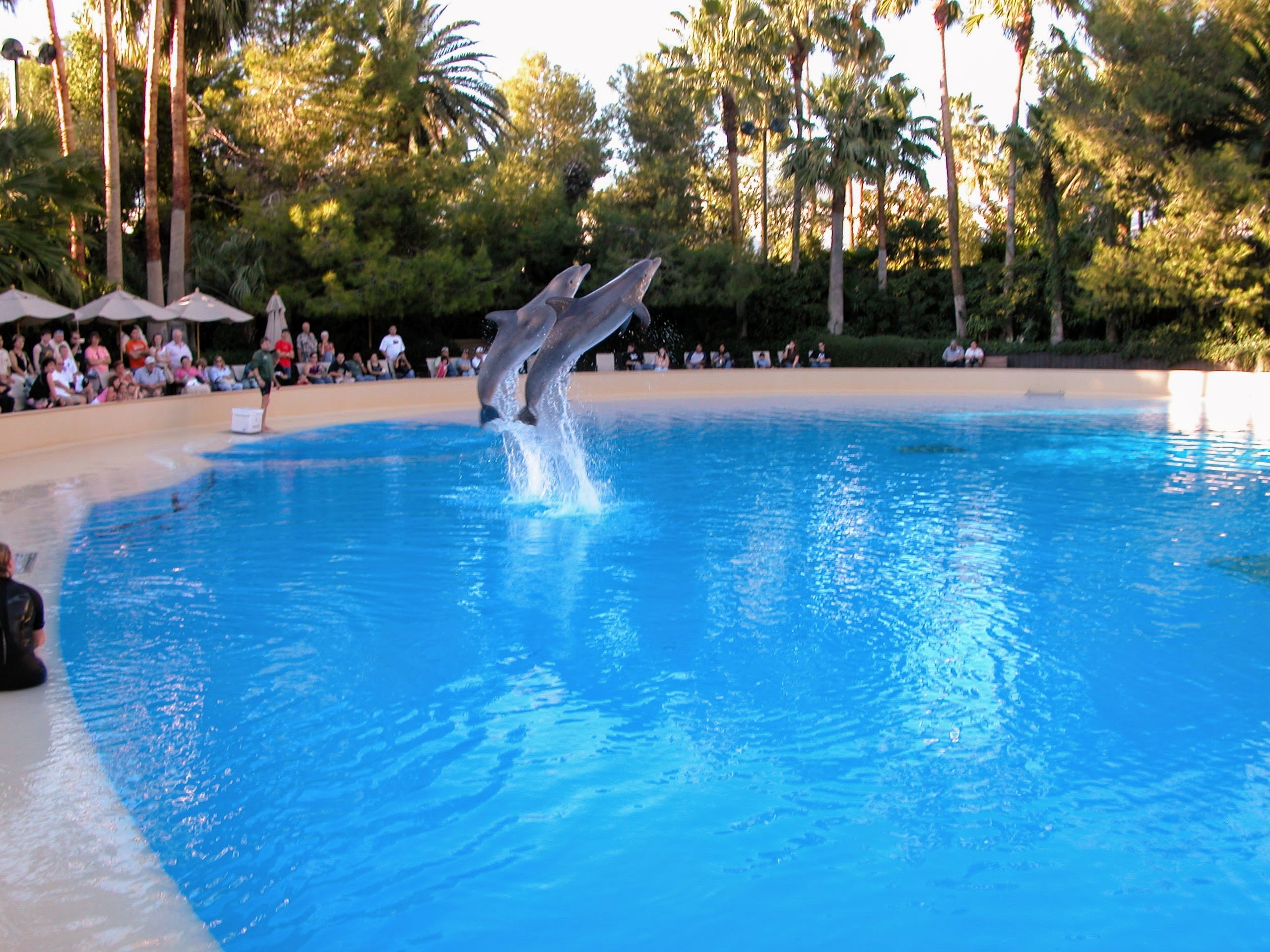Dolphin Habitat at The Mirage, Las Vegas