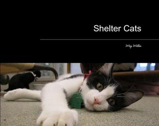Shelter Cats By Meg Miller
