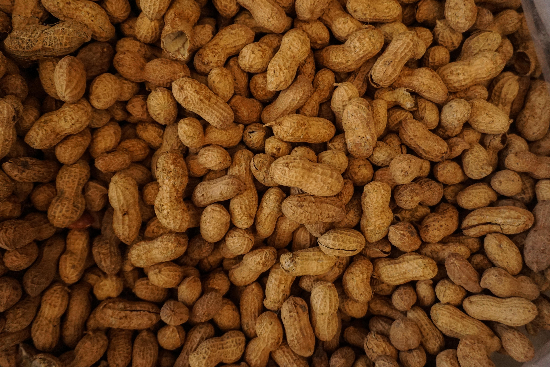 Deren mit schweren Lebensmittelallergien