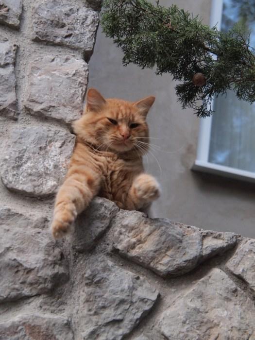 security cat