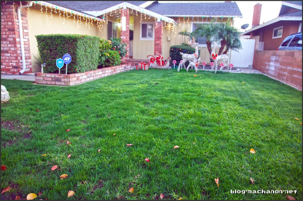 Restoring our front yard.