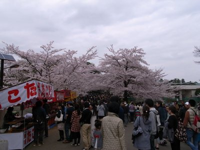 sakura_20110409_1.jpg