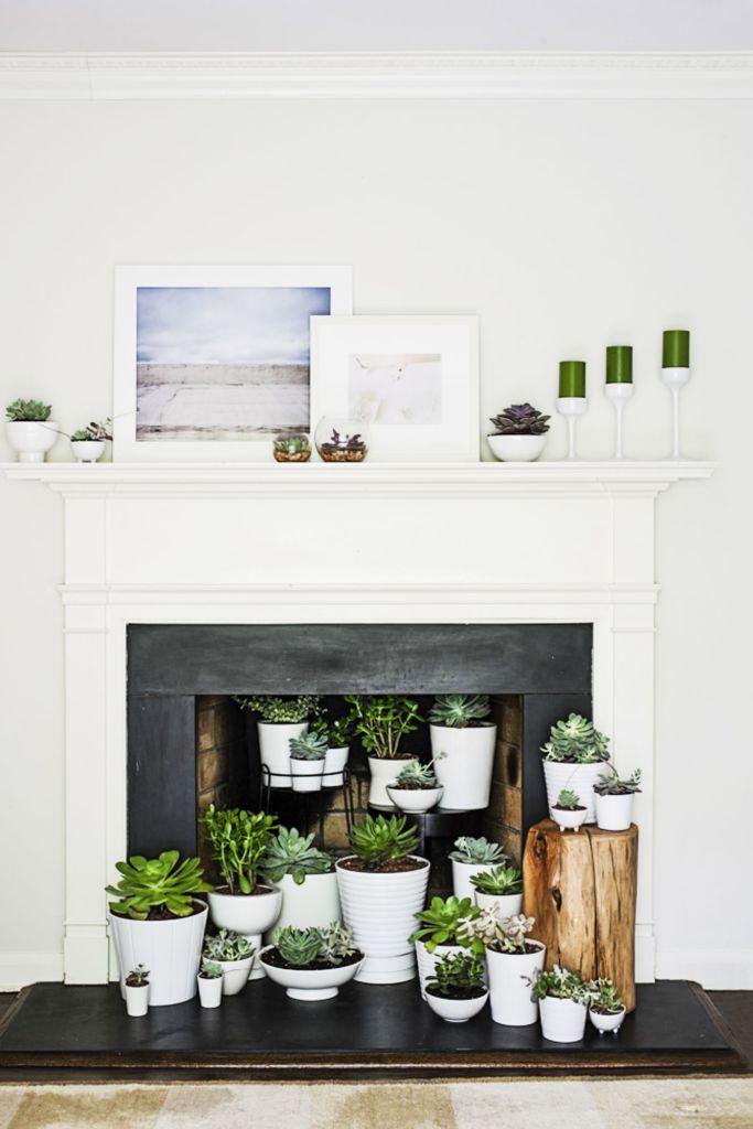 Accumulation de plantes grasses dans l'âtre d'une cheminée